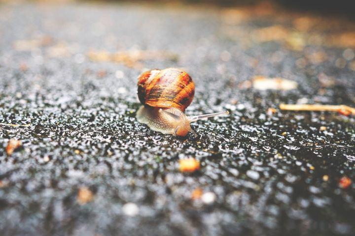 snails-pace